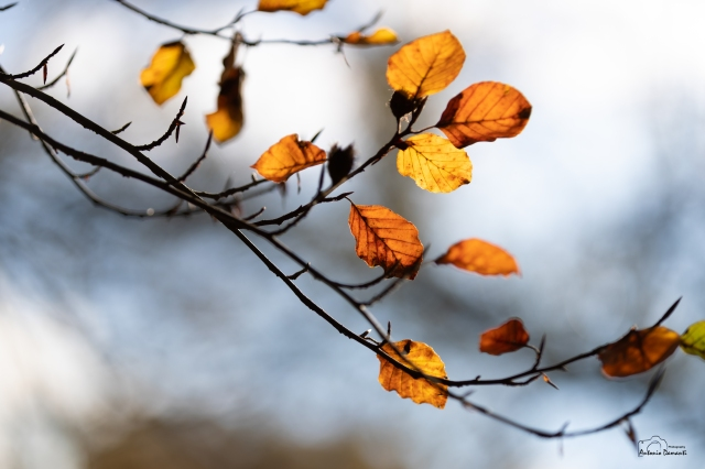 Sono soltanto foglie